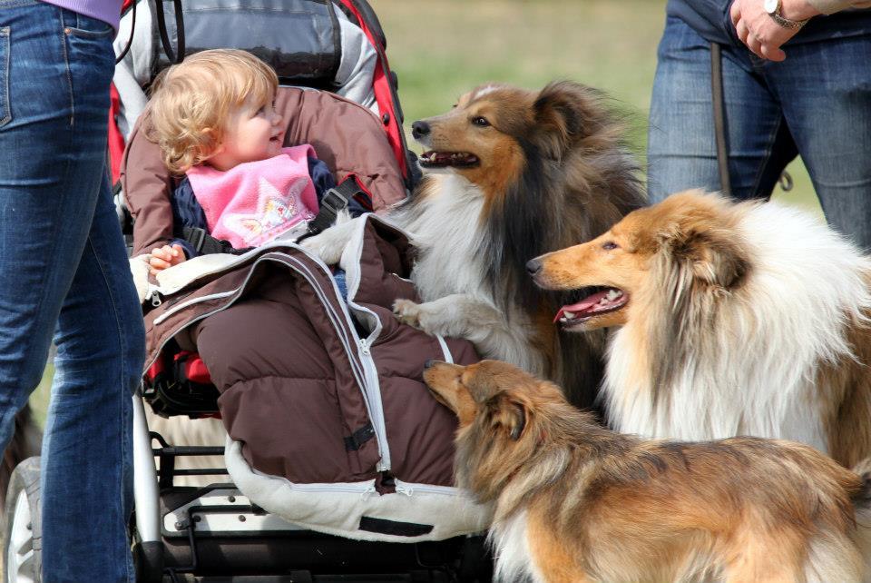 Bozena und hunde