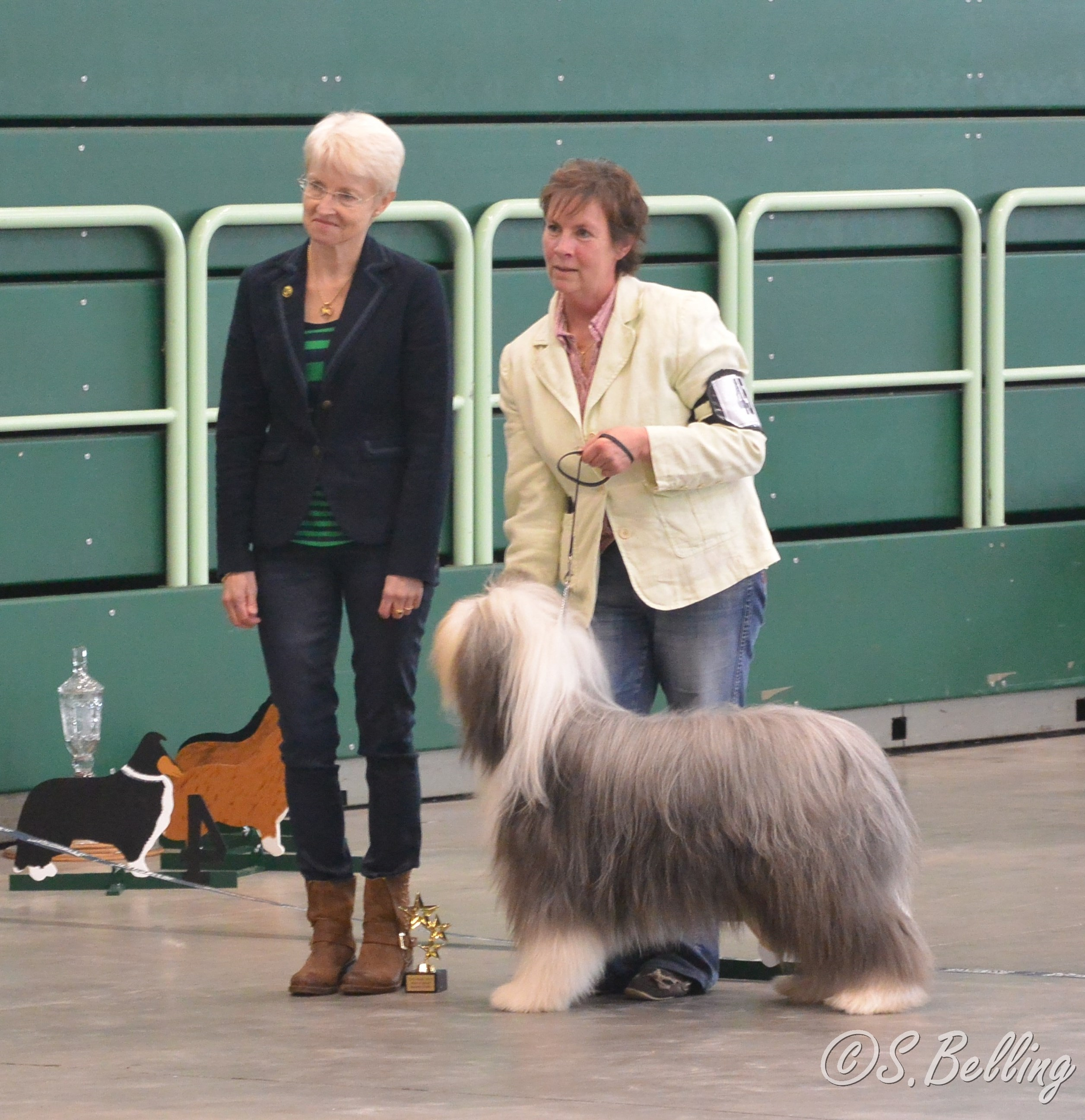 BOB Bearded Collie - Bonny and Clyde's Next Best Superstar,