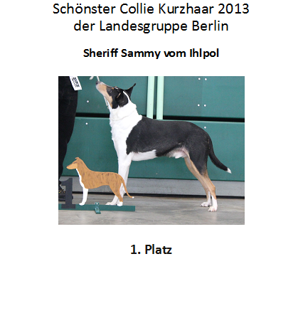 Collie kurz 1. Platz